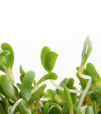 Ensalada de frutas con germinado de alfalfa