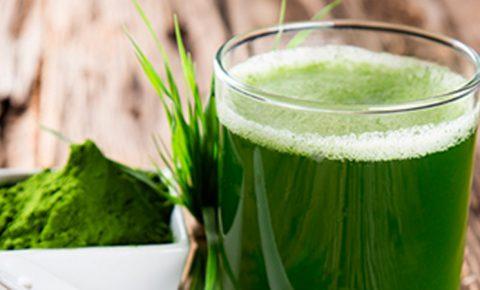 Alga espirulina, una aliada del sistema inmunológico