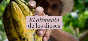 Cacao Grijalva: orgullosamente nuestro