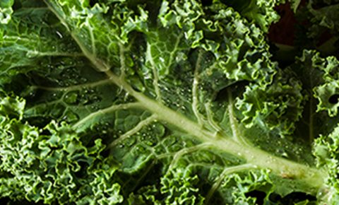 Cinco razones para entrarle al kale (o col rizada) con gusto