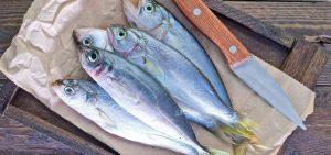 Los mejores pescados de la temporada