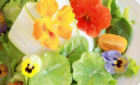 Cuaresma, primavera ¡y mucho sabor!