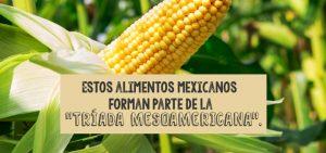 Del campo a la mesa: Dieta Mesoamericana