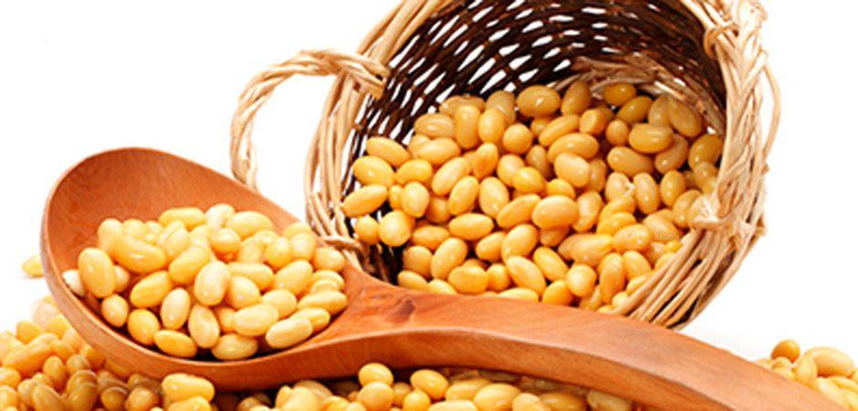 Frijol de soya, un alimento excepcional