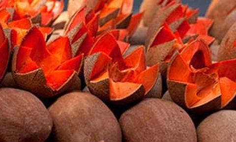 Frutos exóticos de México