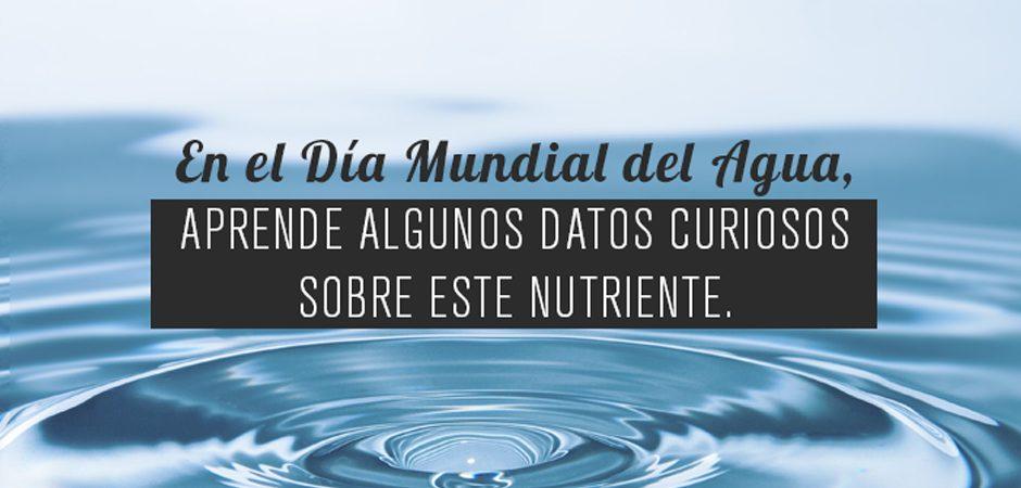 Lo que no sabías acerca del agua
