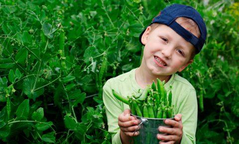 ¿Por qué tu hijo debe comer leguminosas?