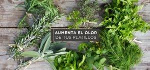 Hierbas aromáticas para las recetas