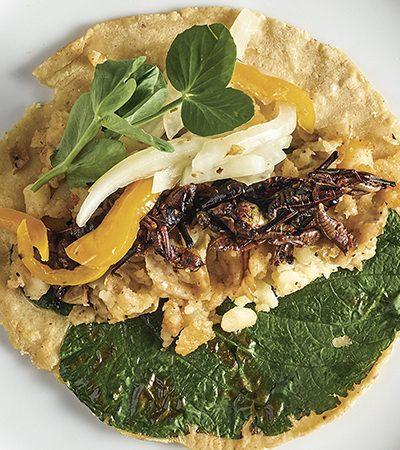 Tacos de Papas con Chapulines